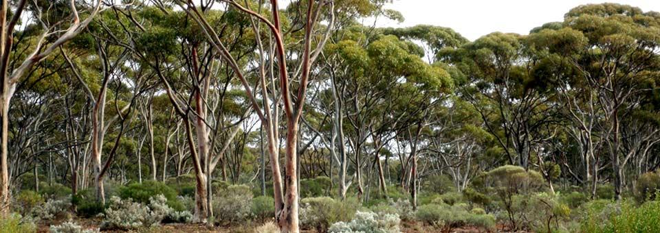 Karlkurla-Park-Kalgoorlie